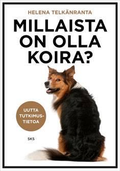 Millaista on olla koira?